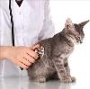 Ветеринарные клиники в Нововаршавке